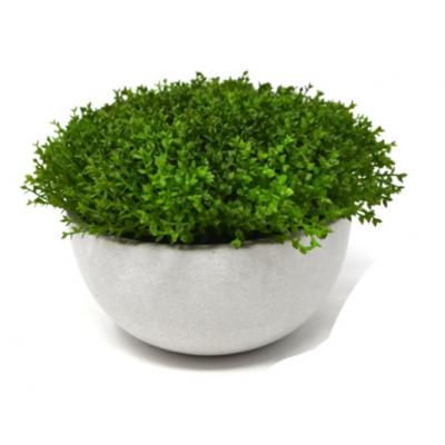 Herbe En Pot