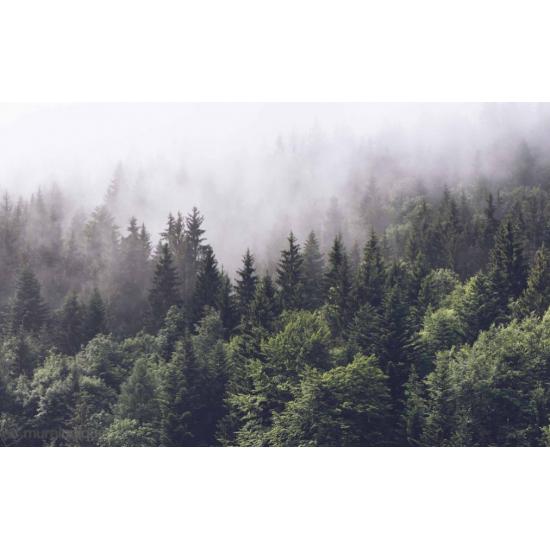 Murale Conifères Dans Le Brouillard